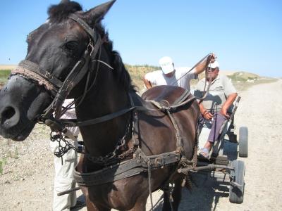 Pe traseul bihorean al Autostrazii Transilvania circula doar carutele trase de cai