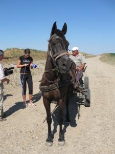 un cal putere pe autostrada