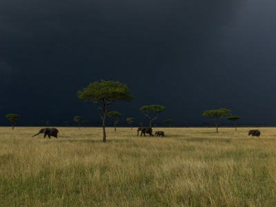 elephants-serengeti-nichols_47912_990x742-1