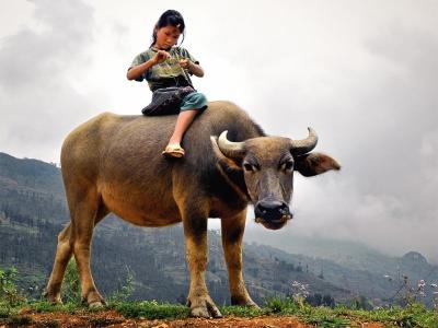 hmong-child-buffalo_india