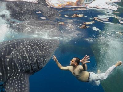 whale-shark-aw_47918_990x742