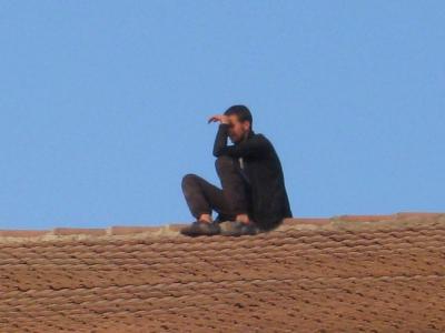 pisica pe acoperisul fierbinte