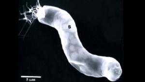 Bacterie in meteorit