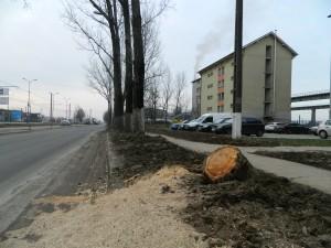 ciot plop borsului