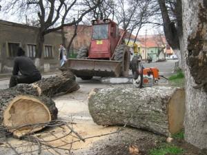 copaci taiati rer