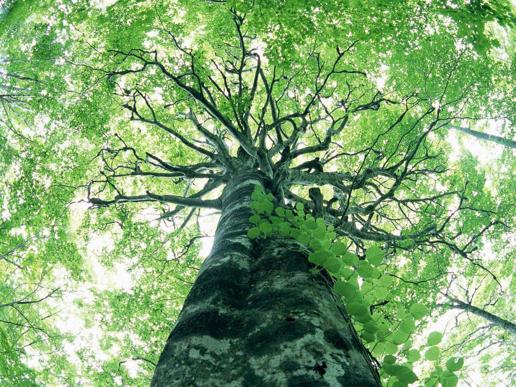 arbore-perpectiva