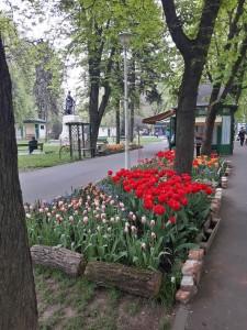 Lalele in Parcul Libertatii din Oradea