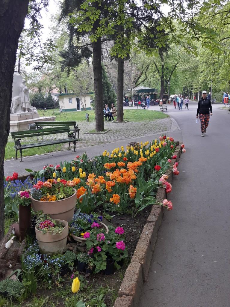 Lalele si alte flori de primavara in Parcul Libertatii din Oradea
